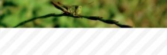 22.03.2017 - Peut-on concilier nutrition et environnement ?