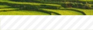 21.11.2017 - Ils ont mis au point un riz capable de pousser dans l'eau salée, pour nourrir des...
