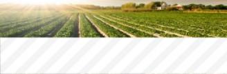 17.10.2017 - Des producteurs agricoles dénoncent les États-Unis